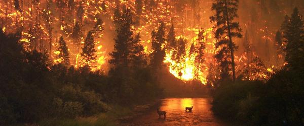 forest-fireapp